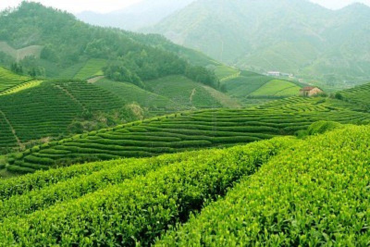 Danh trà truyền thống của người Việt xưa